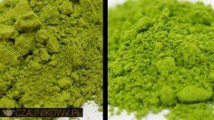 Matcha Japońska a Matcha Chińska: czym różni się zielona sproszkowana herbata Matcha