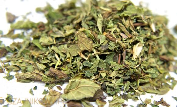 Herbata z melisy poprawia zdolność koncentracji. Melisa dobra na opryszczkę