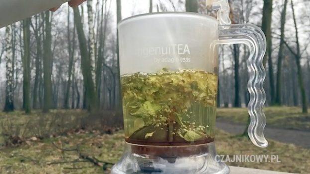 Herbata z Gojnika polepsza samopoczucie